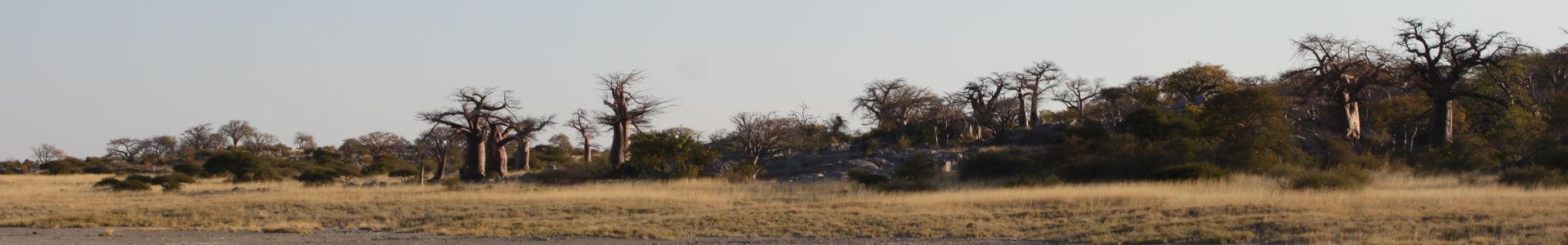 Mowana image for slider