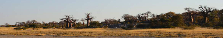header image of Kubu Island
